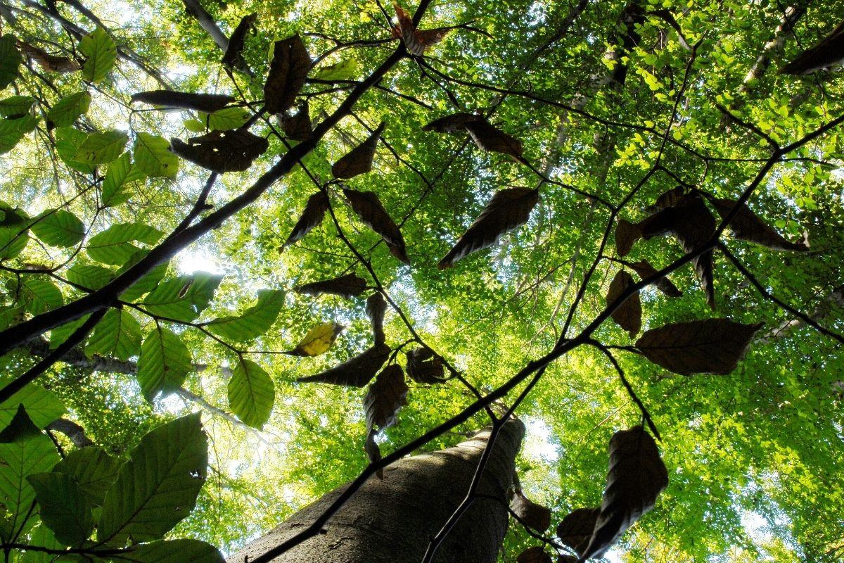 Visit Tamar Valley A unique woodland experience